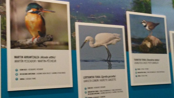Fichas de aves