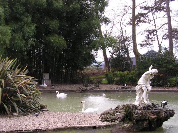 Cisnes del parque del Palacio de Aiete