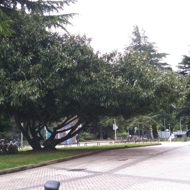 Campos de baloncesto en el pequeño parque del Politécnico de Easo.